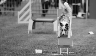 Concours Agility 26 Mars 2017